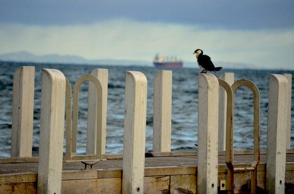 Penguin Harbour